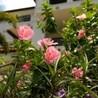 Tadeos Landscaping