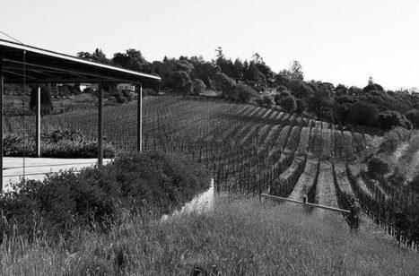 Is California Syrah Misunderstood? | Vitabella Wine Daily Gossip | Scoop.it