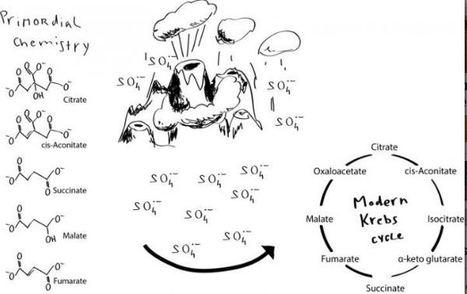 El ciclo de Krebs sin enzimas puede haber sido ...