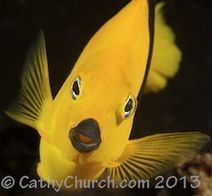 Q&A: Underwater Photographer Cathy Church - Explore | Lets Get Wet - Scuba and Ocean News | Scoop.it