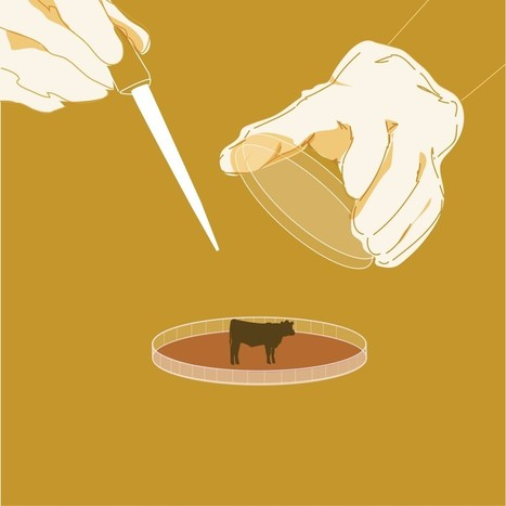 Are you ready for meat grown in a Petri dish? | thefuture | Scoop.it