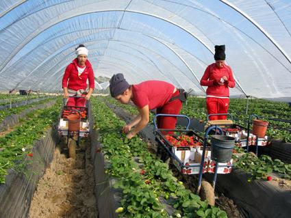 L'agriculture biologique prise au piège de la grande distribution - Business - Basta ! | Génie alimentaire | Scoop.it
