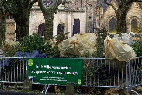 Après les fêtes, Bordeaux met en place la collecte des sapins | Bordeaux Gazette | Scoop.it