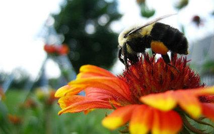 Bees are not so fancy schmancy. | Bees and Honey | Scoop.it