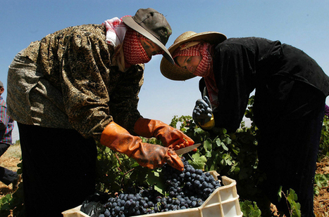 Squeezing grapes under Syrian war clouds | Le Vin Parfait | Scoop.it