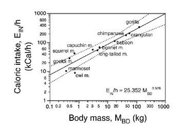 Alimentación y desarrollo encefálico en la evolución del linaje humano   La Naturaleza Humana   All About Food   Scoop.it