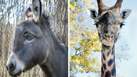 Zoo Animals and Their Discontents | Animals in captivity - Zoo, circus, marine park, etc.. | Scoop.it