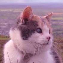 Stevie, le chat aveugle qui aime gravir des montagnes avec son humain (Vidéo du jour) | CaniCatNews-actualité | Scoop.it