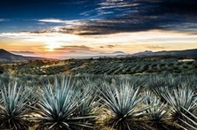 A Visit to Tequila Country, Mexico - Wall Street Journal   Hecho en México   Scoop.it