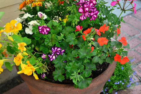 How to Eat Flowers | Container Garden Cornucopia | Scoop.it