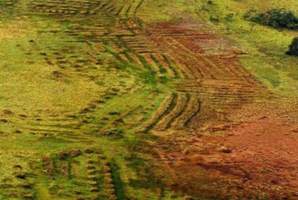 Les précolombiens cultivaient la savane sans la brûler ! Des enseignements à tirer | D'outre-terre, d'outre temps | Scoop.it