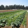 agriculture et développement territorial