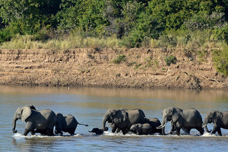 Clinton Global Initiative pledges $80 million to combat elephant poaching | Life on Earth | Scoop.it