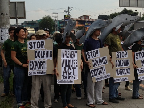 ACTIVISTS CONDEMN RESORTS WORLD SENTOSA, DA & BFAR FOR DOLPHIN DEATH | Earth Island Institute - Philippines | Makamundo (Earthly) | Scoop.it