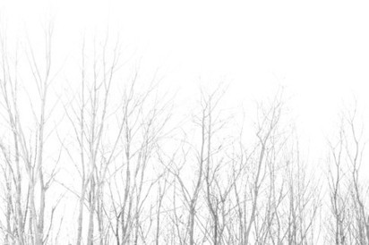 Download 6 beautiful treeline Photoshop brushes   The Official Photoshop Roadmap Journal   Scoop.it