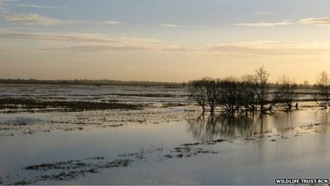 Fens are rare wildlife 'hotspot' | 100 Acre Wood | Scoop.it