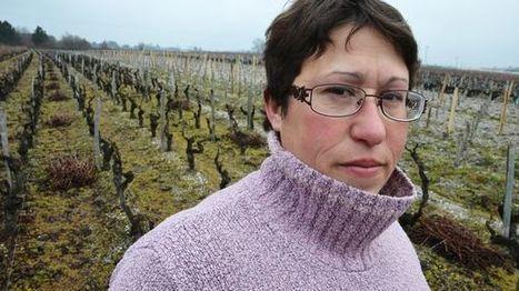 Des citoyens qui changent le monde (2) : La vigne et Superphénix | Le vin quotidien | Scoop.it