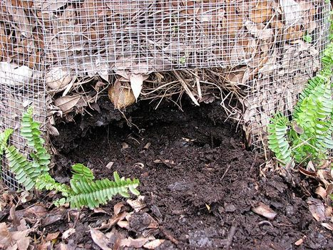 Composting in New York City - Organic Connections | Family issues | Scoop.it