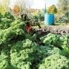 L'agriculture urbaine, une image de marque pour Montréal   LeDevoir.com   Courts-Circuits.Com   Scoop.it