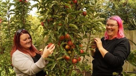 Hoon Hay garden transformed   edible landscaping   Scoop.it