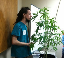 Aquaponics Medical Marijuana Growing Course - The Aquaponic Source | Aquaponics World View | Scoop.it