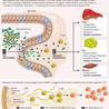 microbiome:The critters within