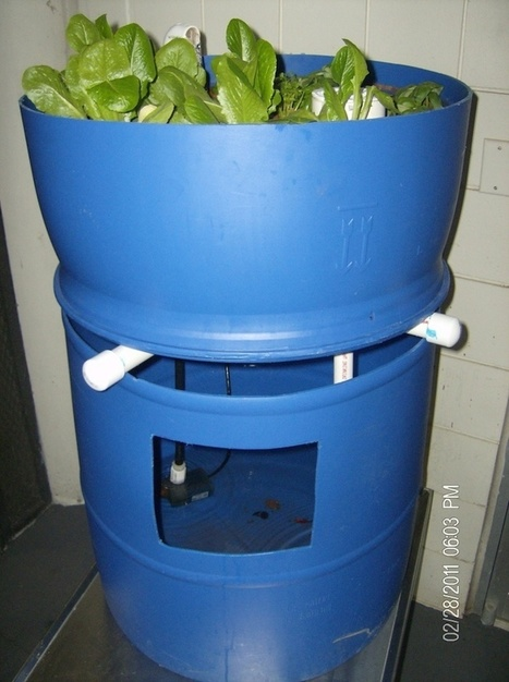 10 Efficient Aquaponic Systems for Unlimited Food | Aquaponics for Aquarists | Scoop.it