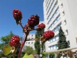 Vergers Urbains, quand les arbres fruitiers partent à la conquête de Paris | Bretagne en transition | Scoop.it