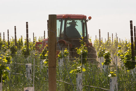 Drought Is Bearing Fruit for Washington Wineries | In The Vineyard | Scoop.it