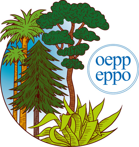 A revision of the EPPO Diagnostic Protocol on Xylella fastidiosa sent for EPPO Member Country Consultation   Diagnostic activities for plant pests   Scoop.it