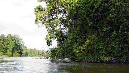 MONTEBOURG mine le Parc Amazonien de Guyane | Sauvegarde et Protection des animaux | Scoop.it