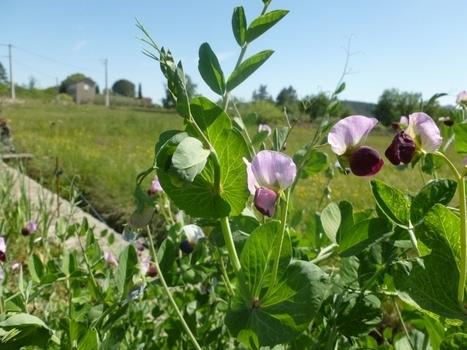 Les bases du jardinage sol vivant | #Etika Mondo news | Scoop.it