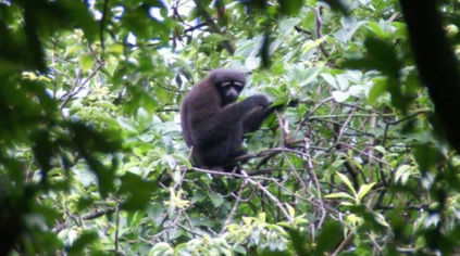 New Species of Primate Is Named After 'Star Wars' | Biodiversity protection | Scoop.it