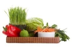 USDA Praises Plant-Based Diets | 64vegan | Scoop.it
