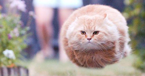 26 Funny Cat Pictures Taken At The Right Time | Cats Rule the World | Scoop.it