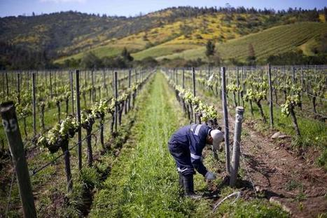As the heat rises, the wines are a-changing | In The Glass Wine and Spirits News | Scoop.it