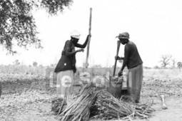 Genre et développement : Les femmes font 40 à 50 % de la main- d ... - Le Soleil | Agribusiness | Scoop.it