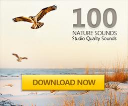 Audio Conversion Software Online | AudioFormat.com | Ressources éducatives libres (OCW, OEC et REL) | Scoop.it
