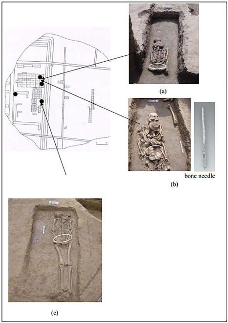 Découverte en Chine de la plus vieille trace de soie | EntomoNews | Scoop.it
