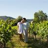 Oenotourisme ou tourisme viticole en Vaucluse