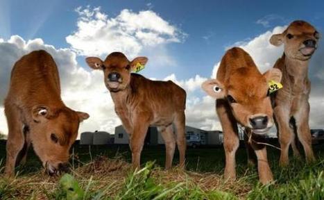 Manger trop de viande détruit la planète selon une ONG | Les lapins agiles | Scoop.it