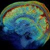 Psicología: Una perspectiva práctica