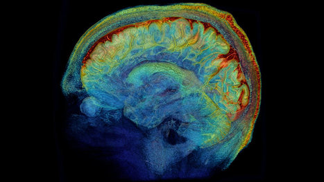 The Brain, in Exquisite Detail | Brains & Things | Scoop.it