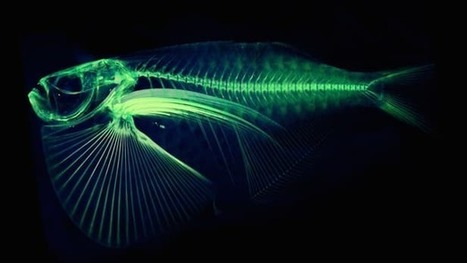 Every fish species on Earth might soon be downloadable | Michael Irving | GizMag.com | teaching with technology | Scoop.it