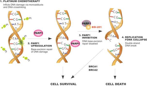 Breakthrough Therapy Designation >> Update on PARP inhibitors including iniparib, o...