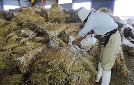 [Eng] Du bœuf contaminé pourrait avoir été envoyé à l'étranger | The Japan Times Online | Japon : séisme, tsunami & conséquences | Scoop.it