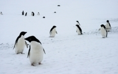 Penguin Populations Are Changing Dramatically | Antarctica | Scoop.it