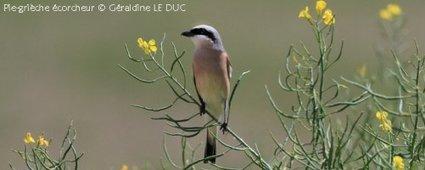 Les oiseaux communs ne sont pas épargnés en Rhône-Alpes - LPO Coordination Rhône-Alpes | The Blog's Revue by OlivierSC | Scoop.it