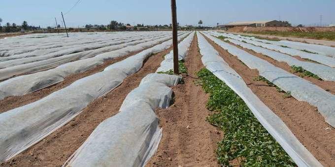 Chlorpyrifos: les dangers ignorés d'un pesticide toxique