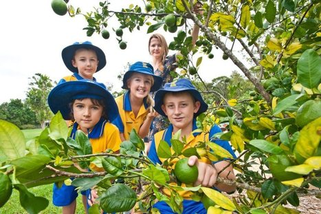 Students reap rewards of a school harvest - Coffs Coast Advocate | School Kitchen Gardens | Scoop.it